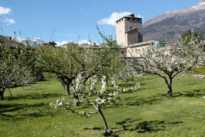 Maley appelboomgaard in de Aosta vallei